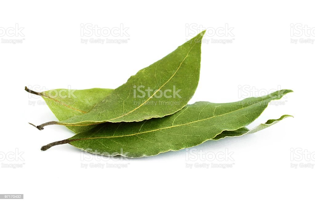 Group of three fresh bay leaves stock photo