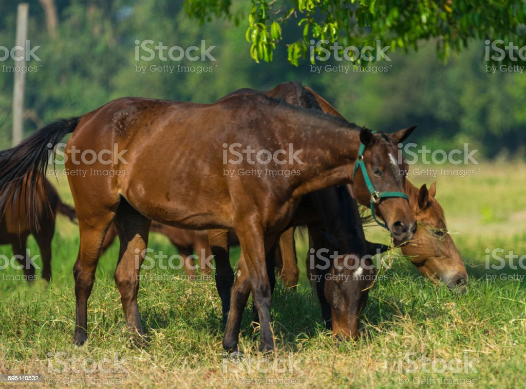 Group of three young horses on the pasture stock photo
