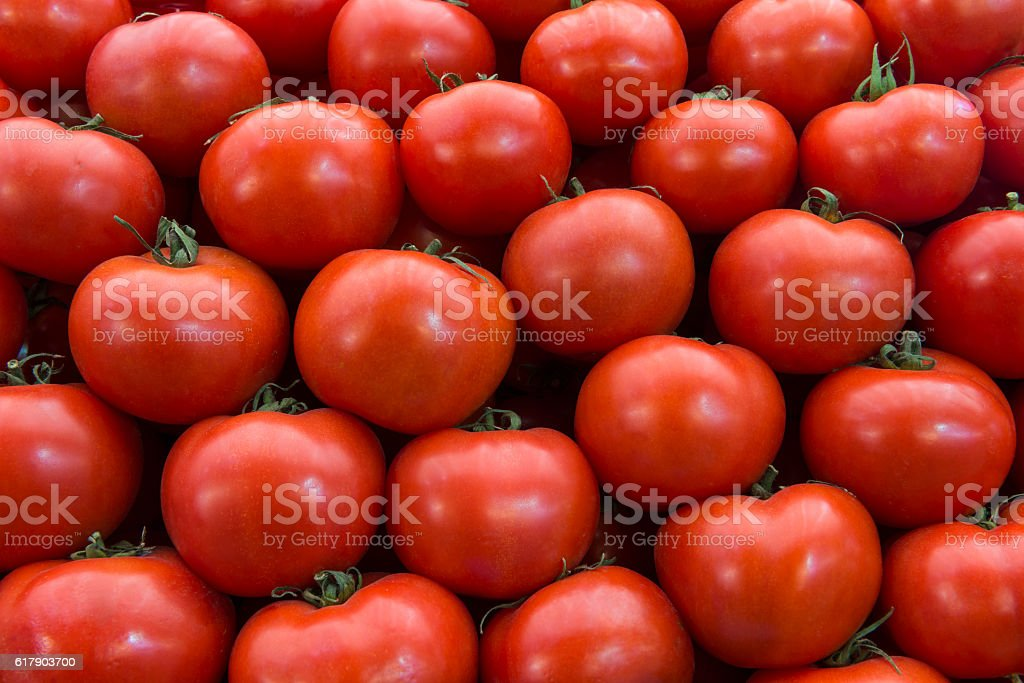 Group of Tomato stock photo