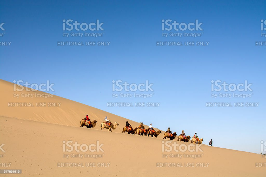 Group of tourists and camels stock photo