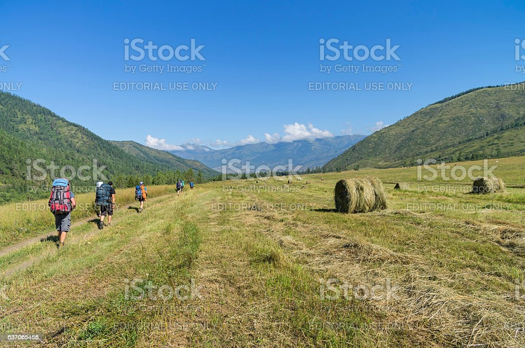 Group of tourists goes along meadow with cut grass. stock photo