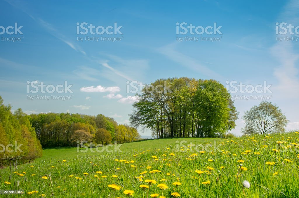 Group of trees in a field in spring stock photo