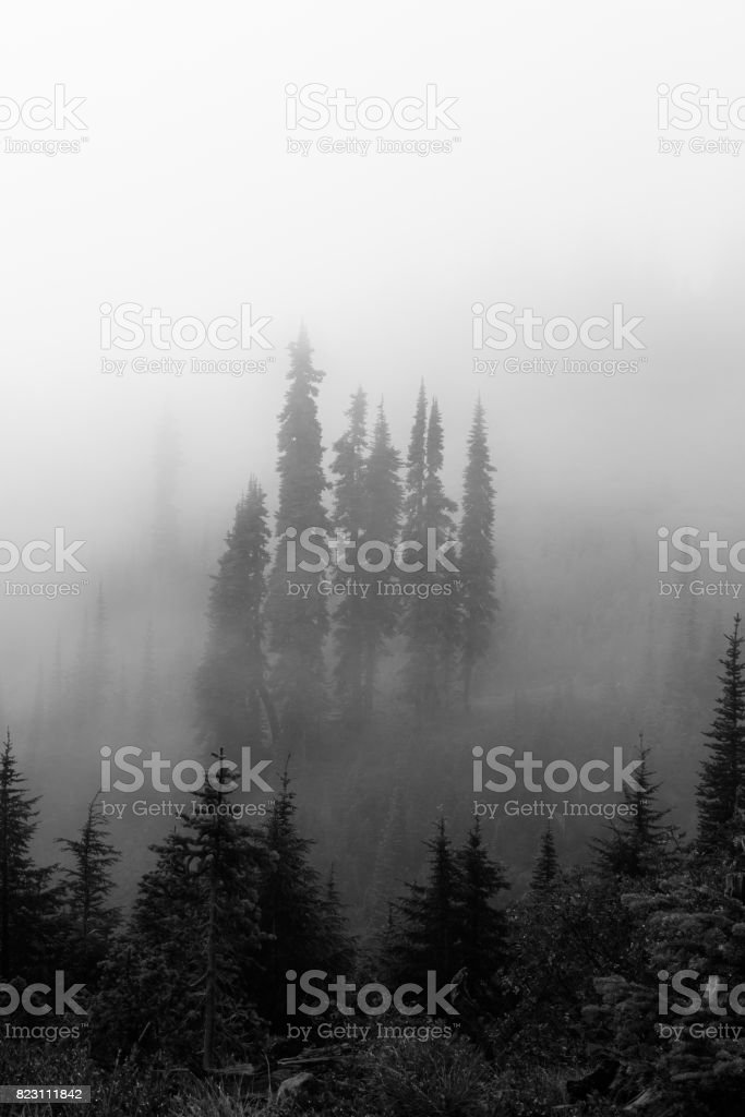 Group of Trees in Mt. Rainier National Park stock photo