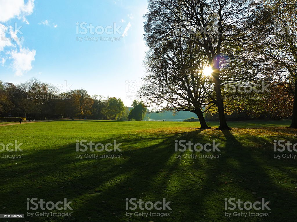 group of trees in park stock photo