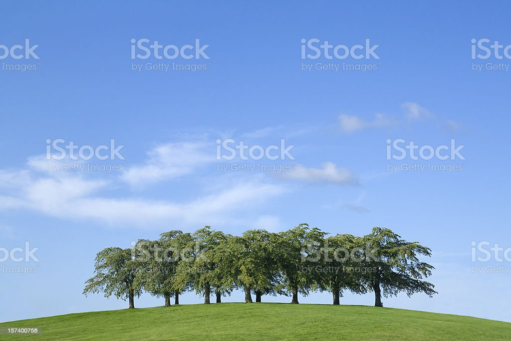 Group of trees stock photo