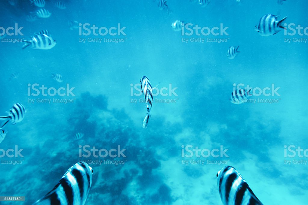 Group Of Tropical Fishes In The Sea stock photo