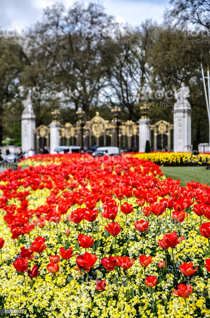 Group of tulips in St-James's Park stock photo