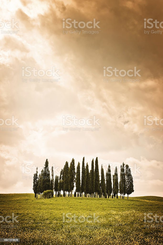 Group of Tuscan Cypresses Emerges from the Storm, Val d'Orcia stock photo