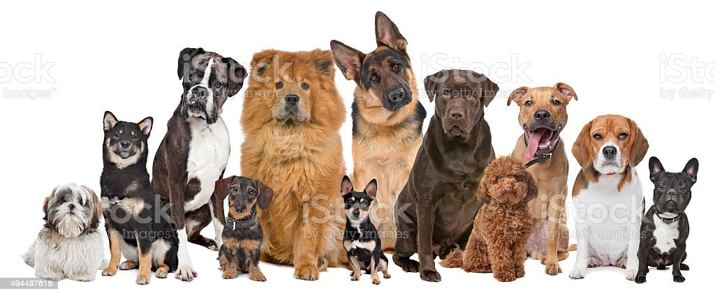 Group of twelve dogs stock photo