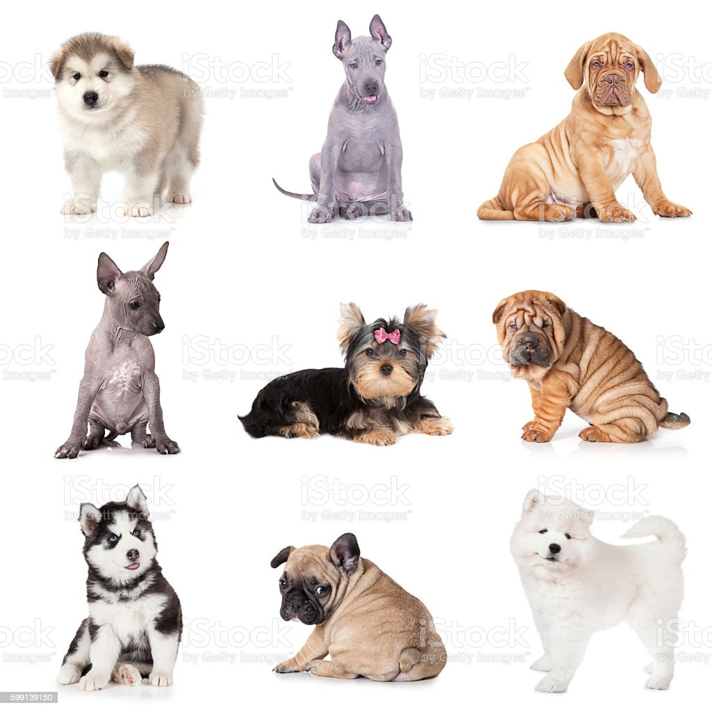 Group of various puppy dogs stock photo