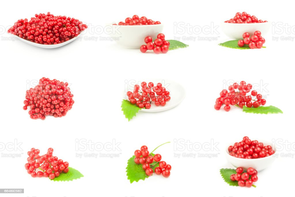 Group of viburnum berries  isolated on a white background cutout stock photo