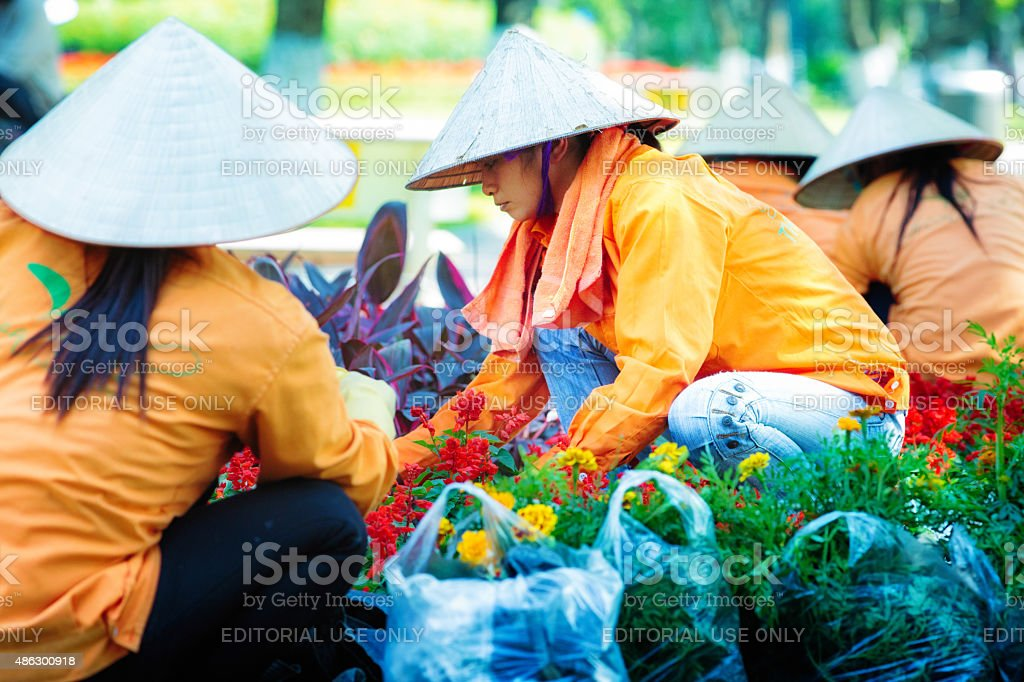 Group of Vietnamese women planting marigolds in Hanoi Vietnam stock photo