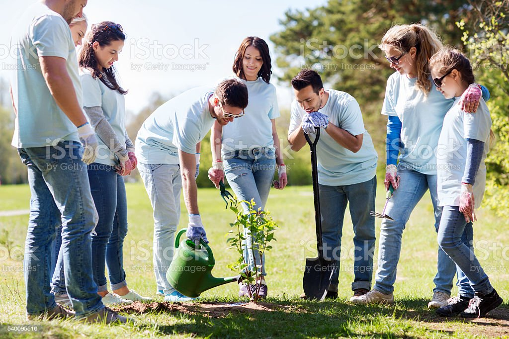 group of volunteers planting and watering tree stock photo