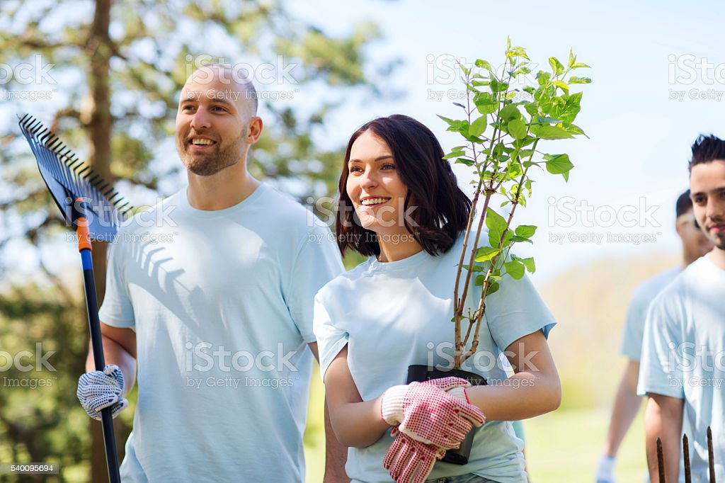 group of volunteers with trees and rake in park stock photo