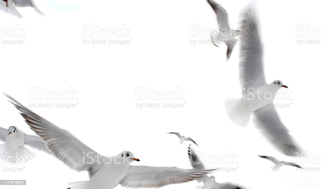 Group of white birds flying together stock photo