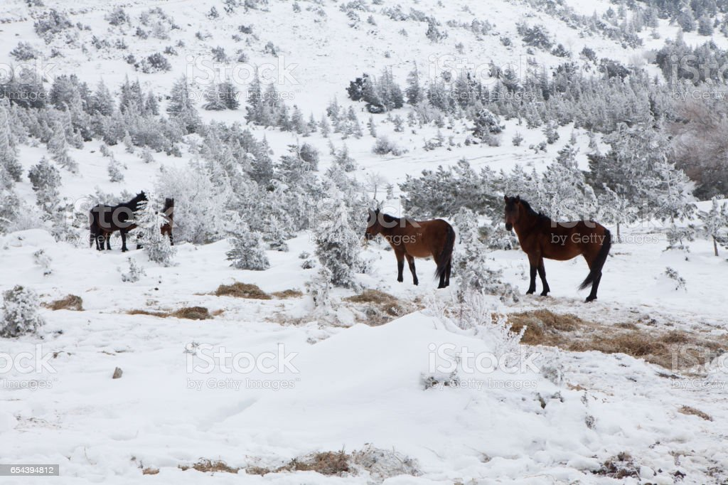 Group of wild horses stock photo