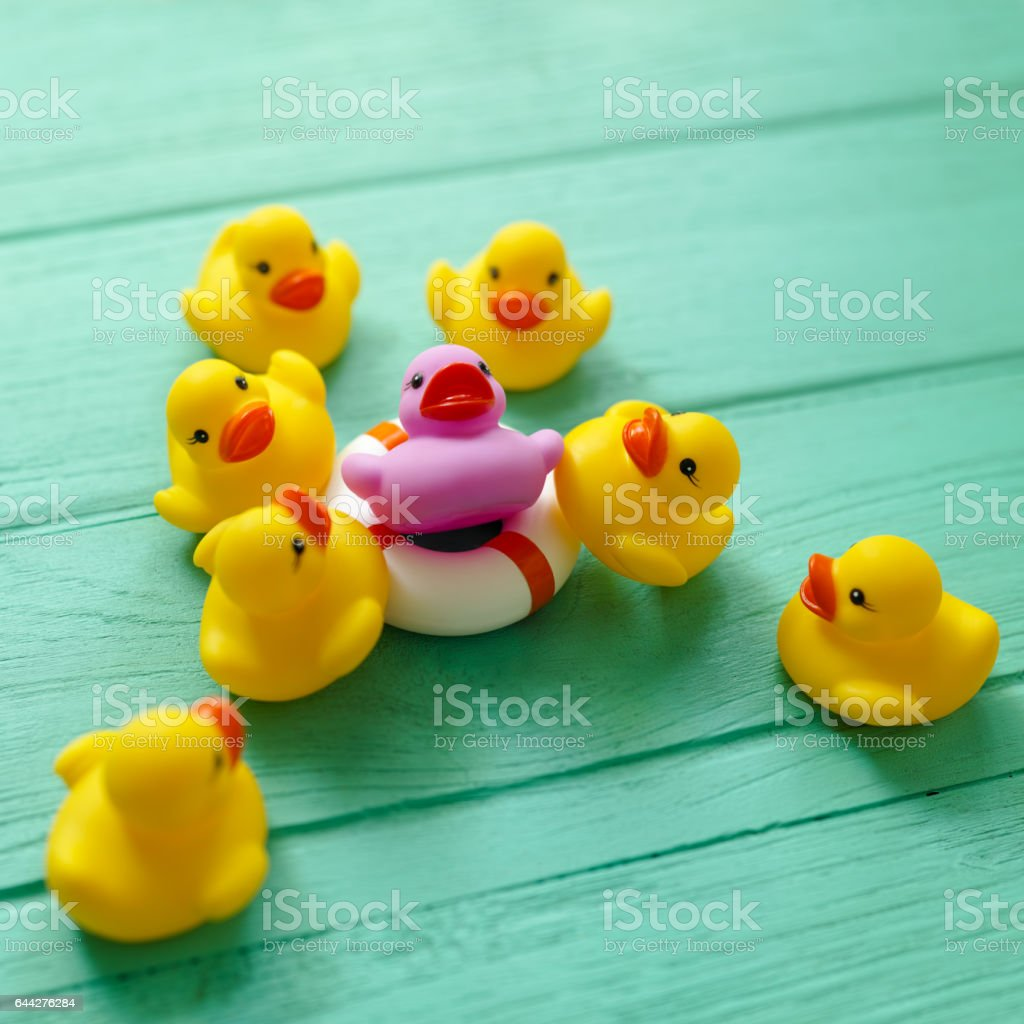 Group of yellow rubber ducks gathering around a purple duck that is sitting on a life saver rubber ring, on a turquoise coloured wooden background. stock photo