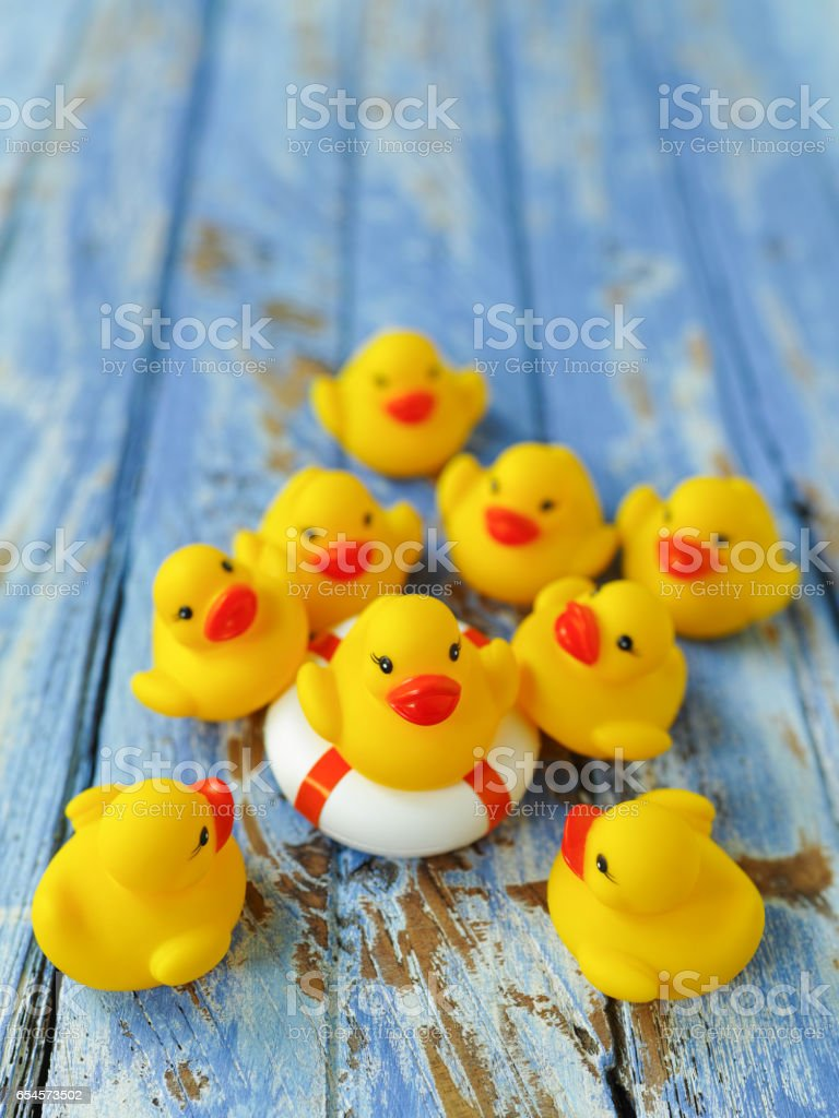Group of yellow rubber ducks gathering around another yellow duck that is sitting on a life saver rubber ring, on a blue weathered wooden table background. stock photo