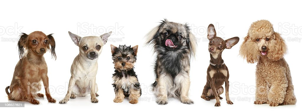 Group of young dogs royalty-free stock photo
