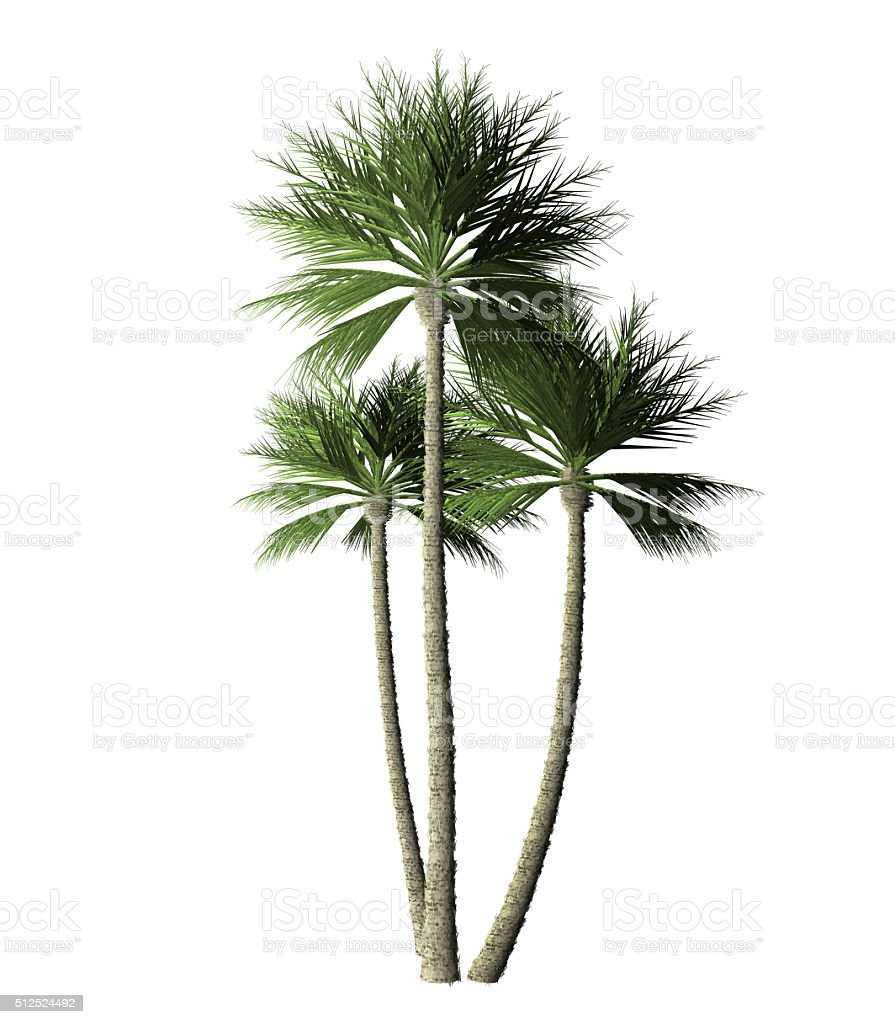 Group  palm trees - digital painting stock photo