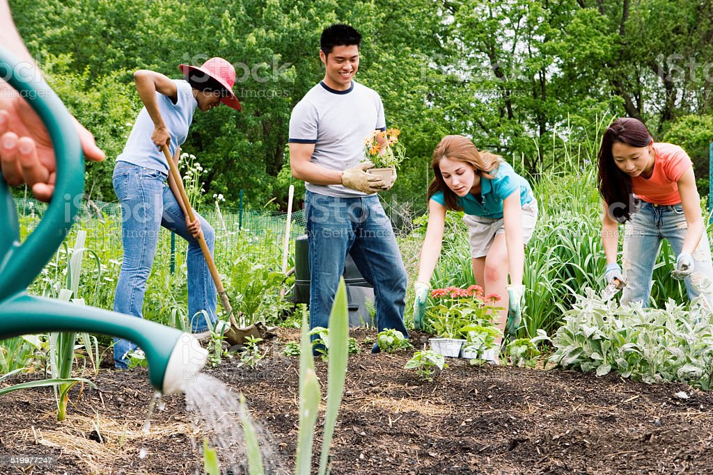 Group planting in community garden stock photo