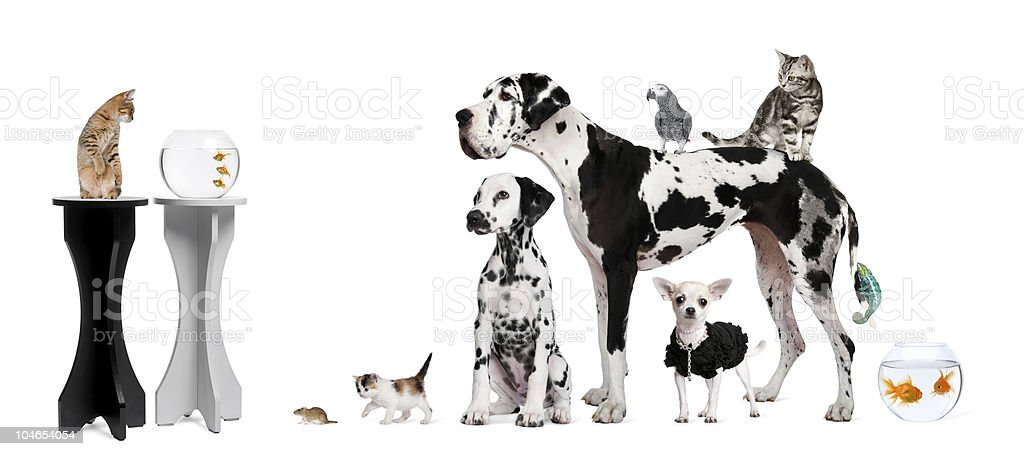 Group portrait of animals, dogs, cats, fish, parrot, chameleon. stock photo