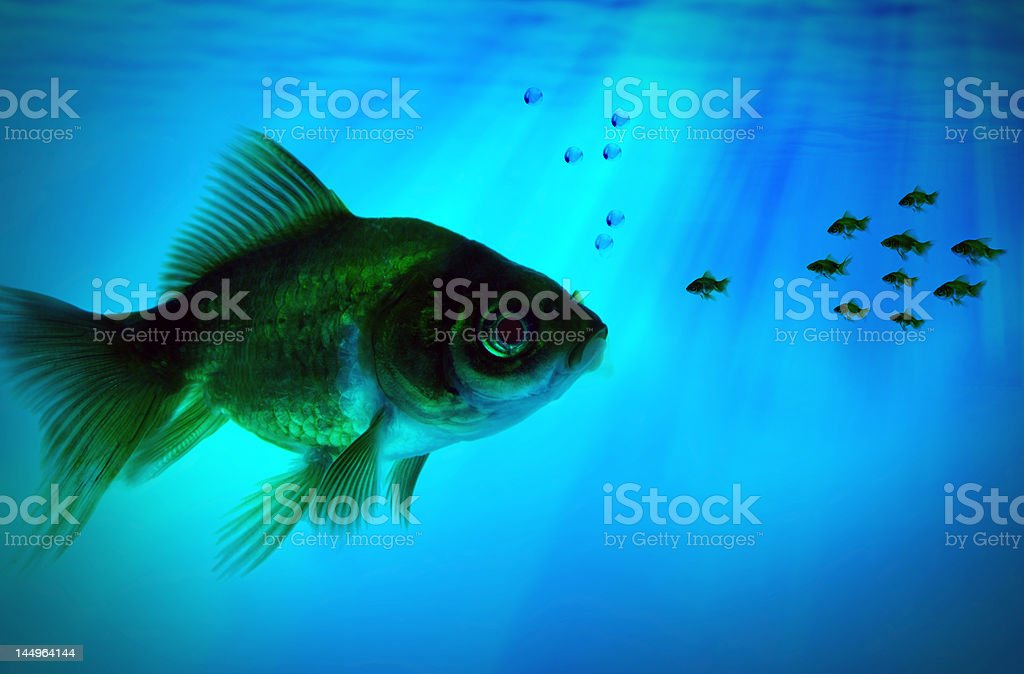 group small fish royalty-free stock photo