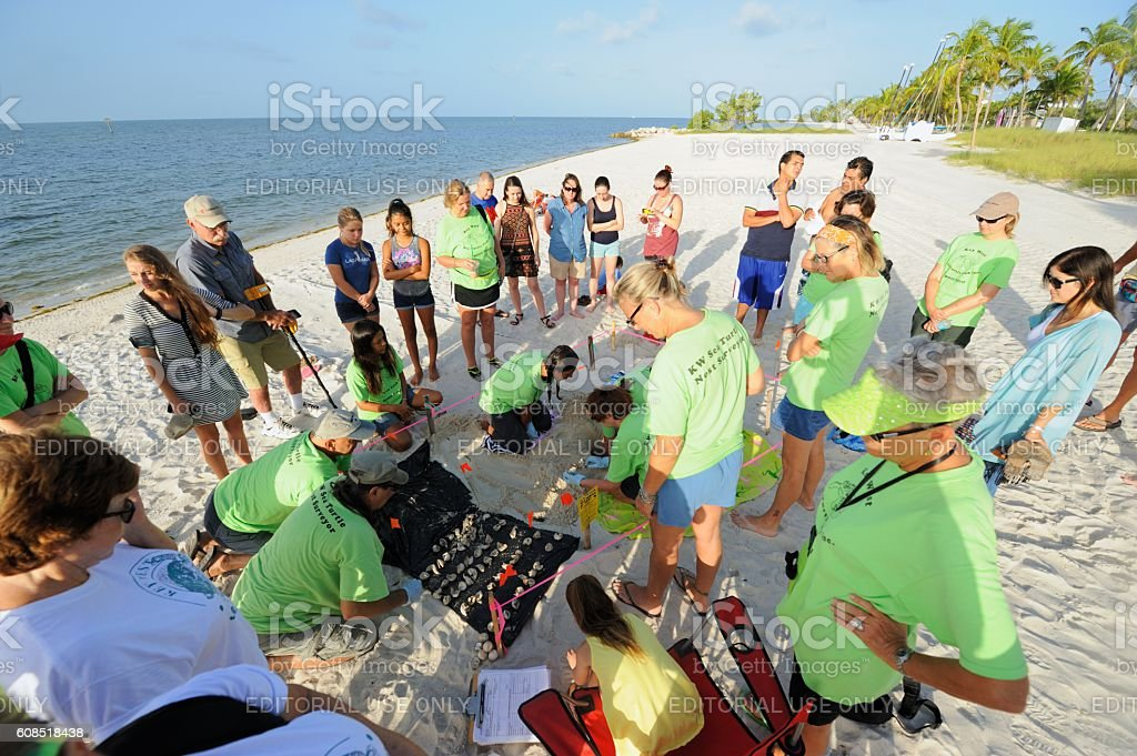 Group watching sea turtle nest survey in Key West stock photo