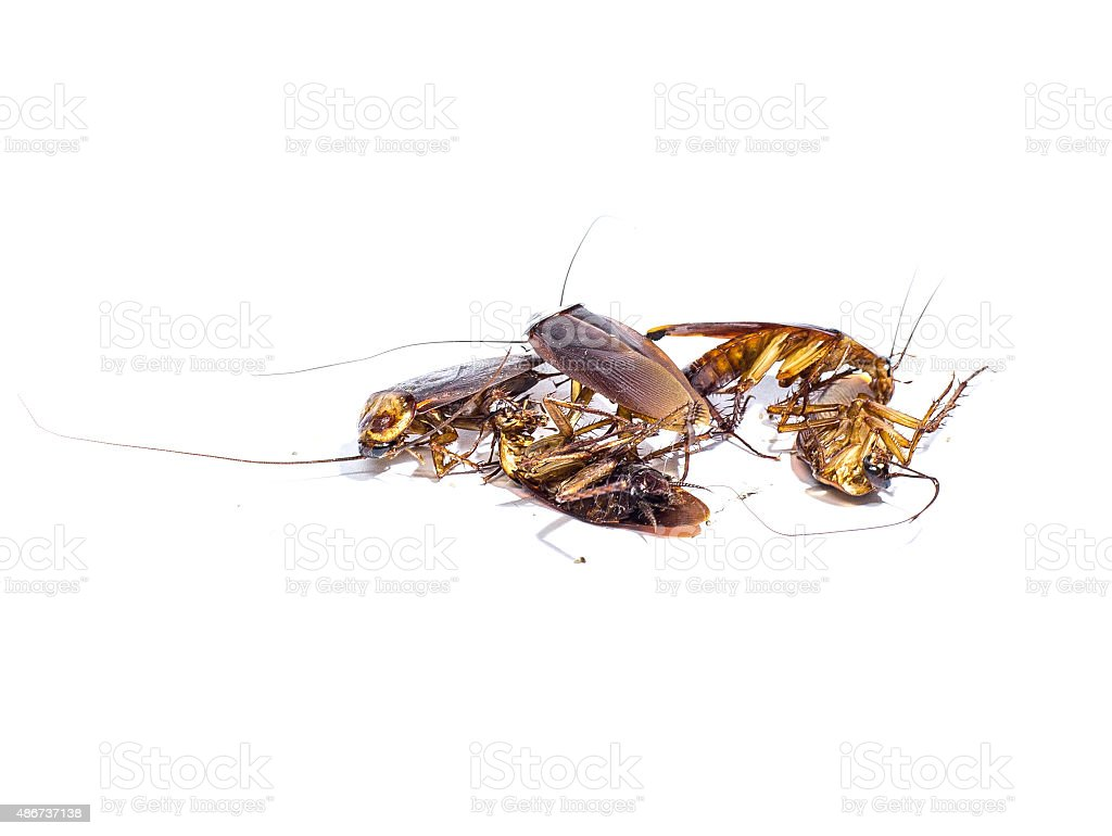 Group,dead cockroaches on white background stock photo