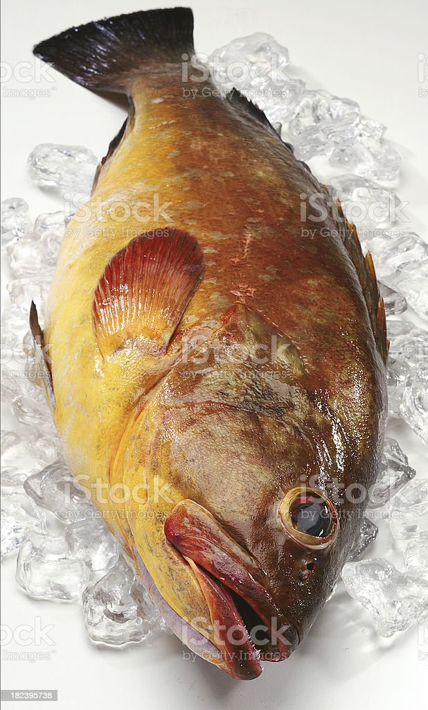 Grouper royalty-free stock photo