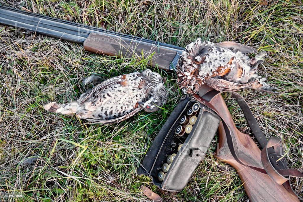 Grouse and rifle on grass stock photo