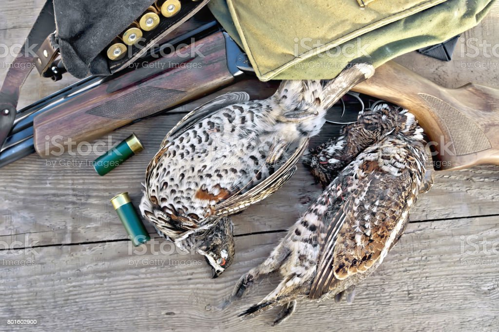 Grouse and rifle with cartridges on board stock photo