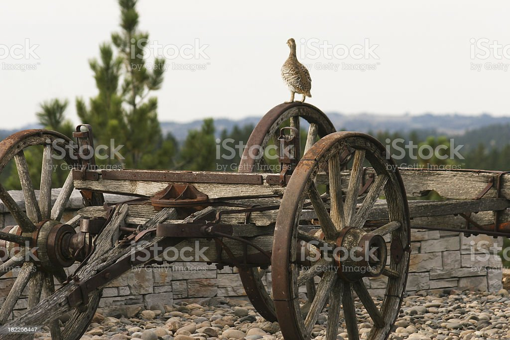 Grouse on old wagon royalty-free stock photo