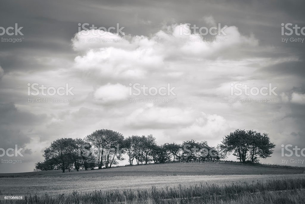 Grove of trees on the field stock photo