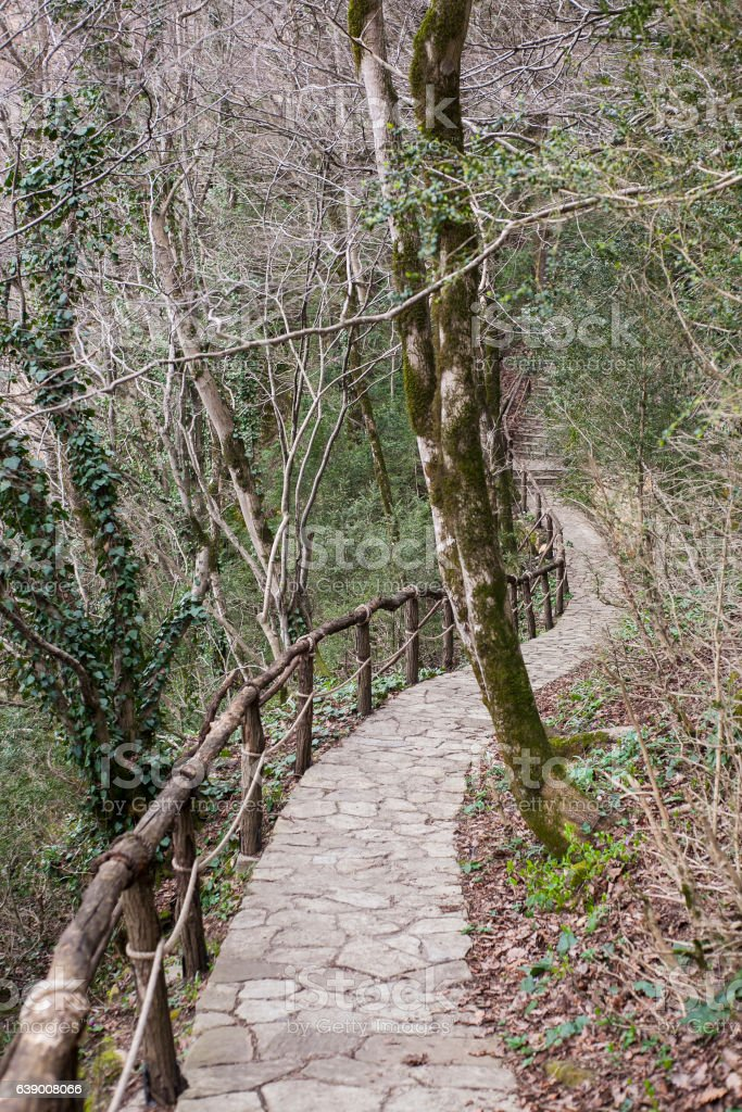 grove of trees with a stone path stock photo