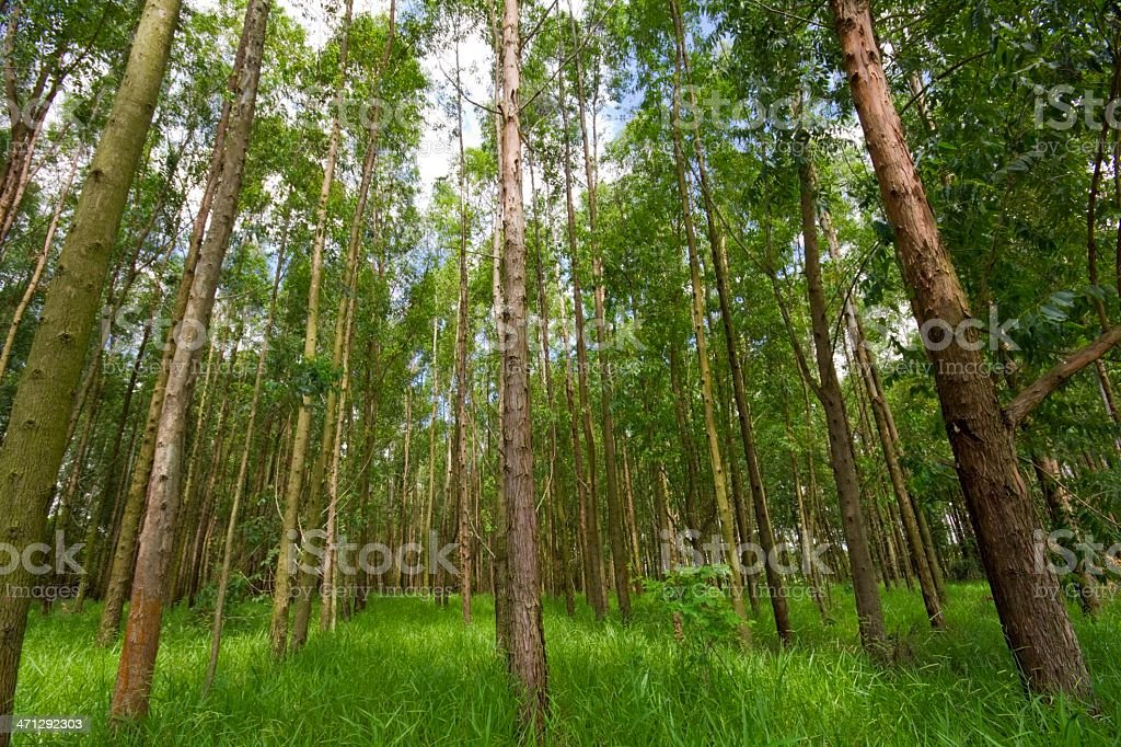 Grove royalty-free stock photo