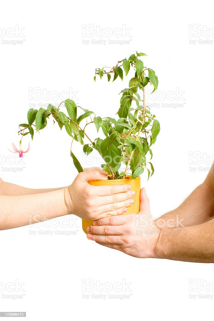 Grow together royalty-free stock photo