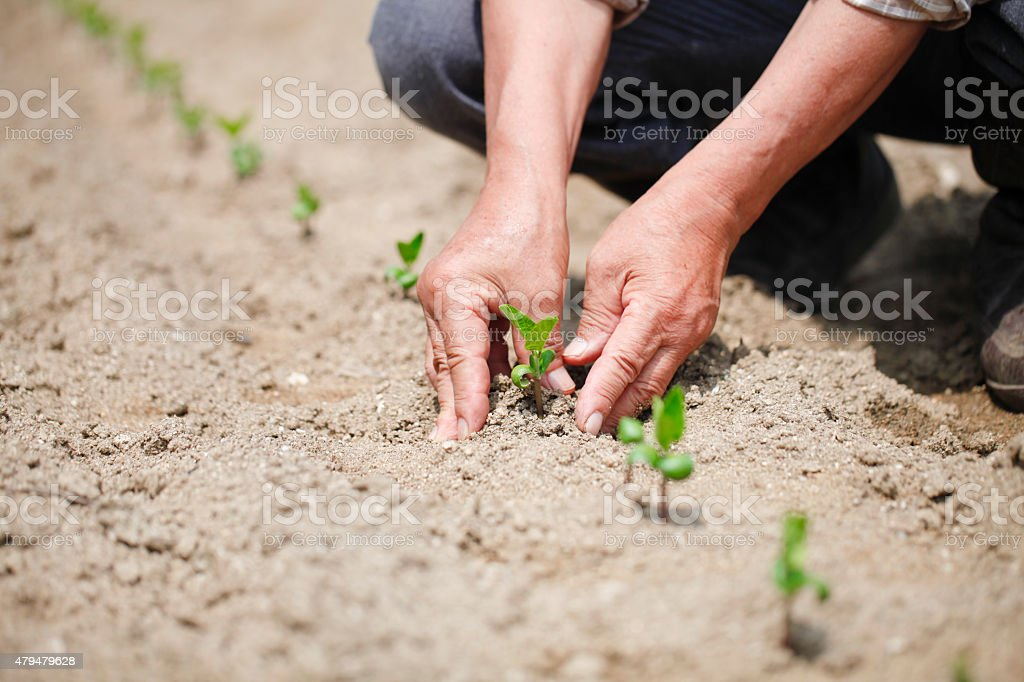 I grow vegetables stock photo