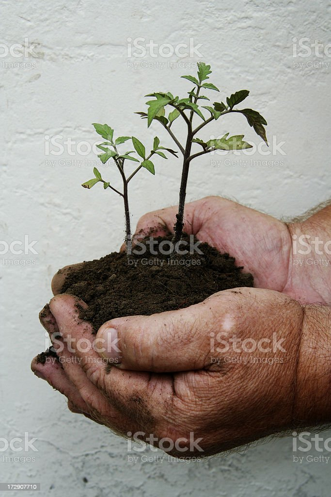 grow where you're planted royalty-free stock photo