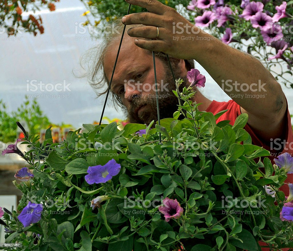 Grower Focuses on Plant royalty-free stock photo