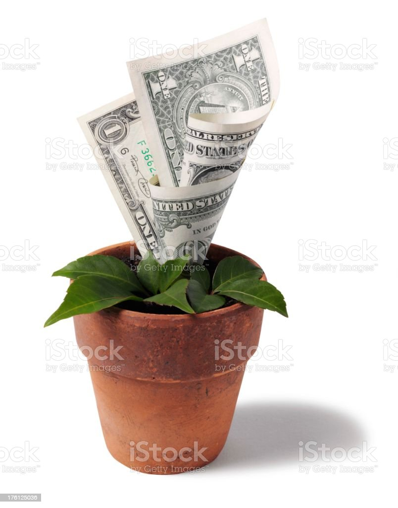 Growing American Dollars in a Plant Pot stock photo