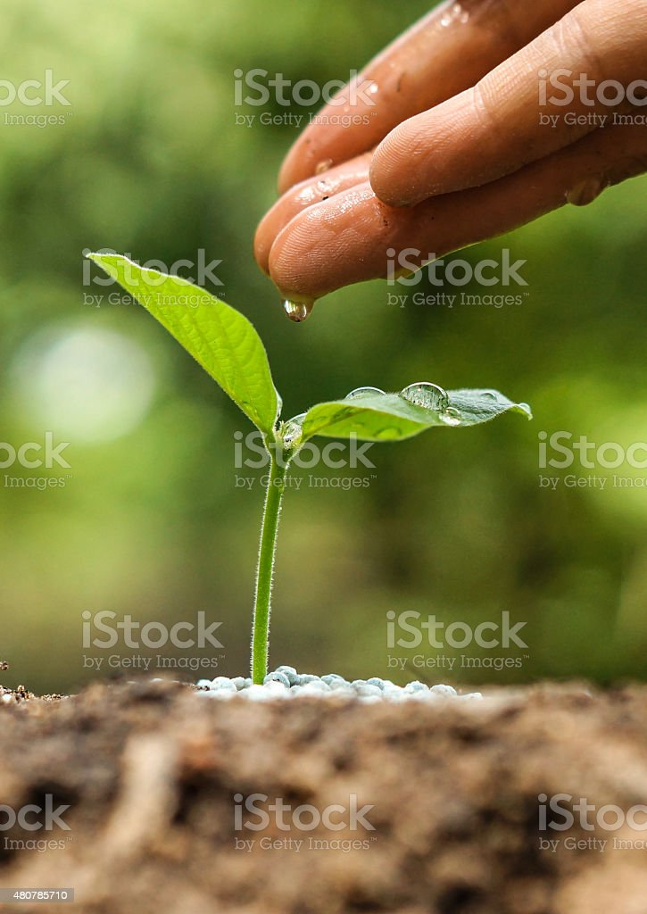 growing and nurturing young green plant stock photo