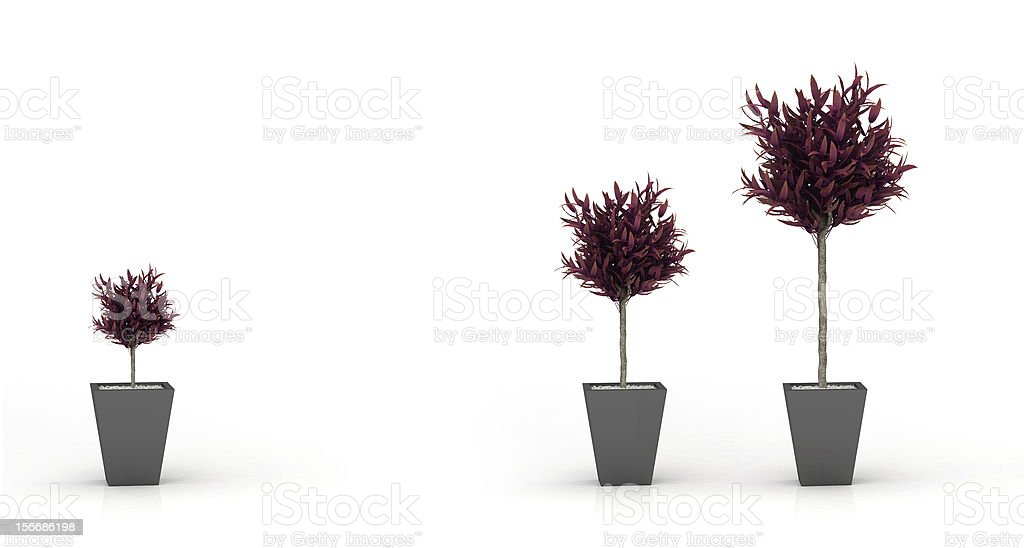 growing autumn plant, isolated on white royalty-free stock photo