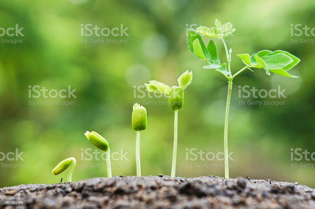 growing baby plants stock photo