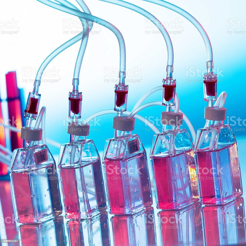 Growing biological culture, bottles the laboratory shaker stock photo