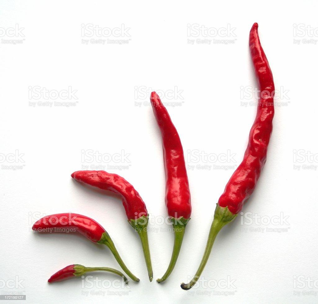 Growing Chili royalty-free stock photo