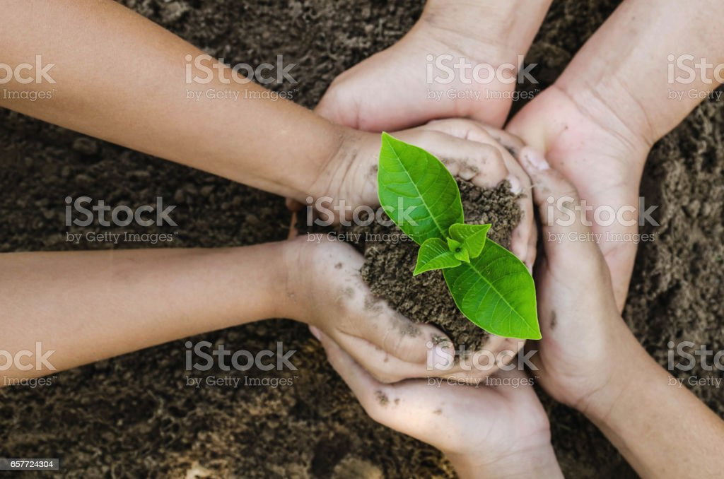 Growing concept eco Group hand  children planting together on soil backgroud stock photo