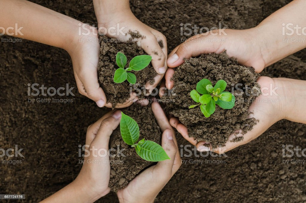 Growing concept eco Group hand  children planting together stock photo