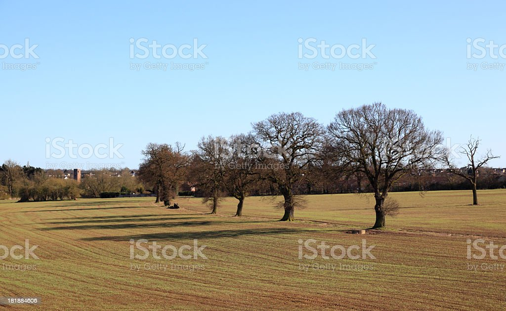 growing crops and trees in fields near Ongar England royalty-free stock photo