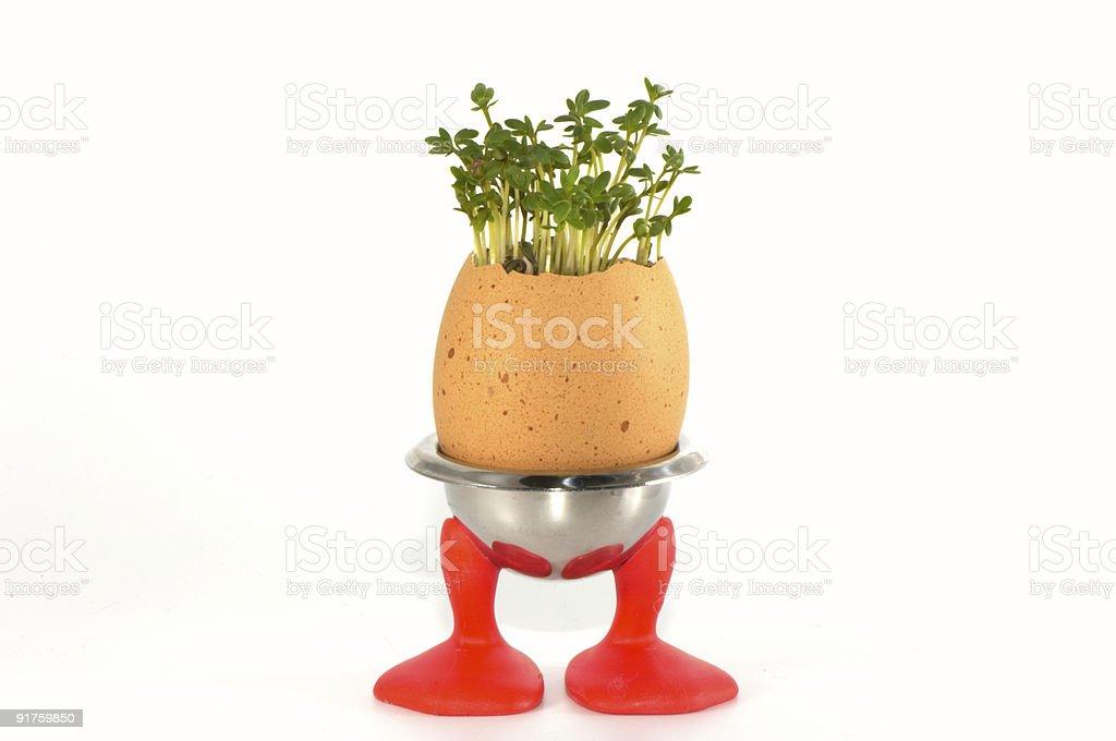 growing egg on legs stock photo